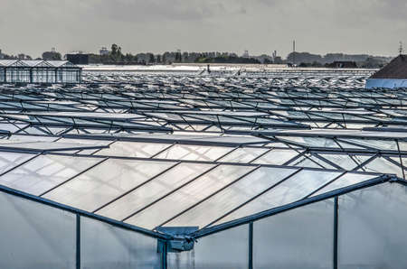 's-Gravenzande, The Netherlands, September 28, 2019: view across a sea of glass panels in the Westland, the main area of greenhouse horticulte in the country Editorial