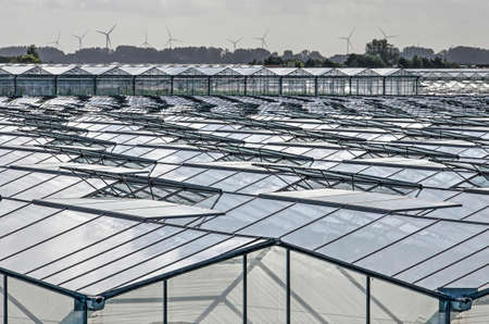 's-Gravenzande, The Netherlands, September 28, 2019: industrial landscape in the Westland horticulture region, with vast areas of greenhouses and a skyline of wind turbines