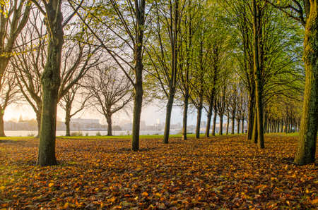Fallen leaves covering the ground in Park de Oude Plantage in Rotterdam, The Netherlands, with a view towards the city center