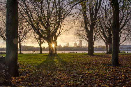 Low sun shining through the trees in Park de Oude Plantage in Rotterdam, The Netherlands, with a view towards the river and the city's skyline Editorial