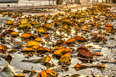 Low view of the Westerkade (West Quay) with fallen alder leaves in a puddle on a sunny day in novmber