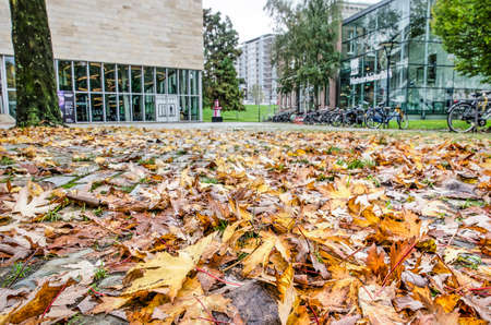 Rotterdam, The Netherlands, November 4, 2019: close-up of fallen leaves in Museumpark, with Kunsthal and Natural History Museum blurred in the background