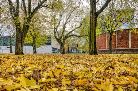 Rotterdam, The Netherlands, November 23, 2019: low view of fallen maple leaves in Museumpark with in the background Kunsthal and Natural History museums