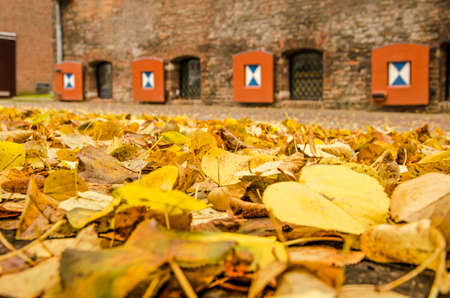 Zwolle, The Netherlands, November 9, 2019: ground covered with linden leaves near the old city wall with a medieva brickl facade with wooden shutters in the background