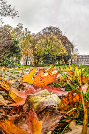 Zwolle, The Netherlands, November 9, 2019: fallen leaves cover the grass in the park on the city's former ramparts on a cludy day in november