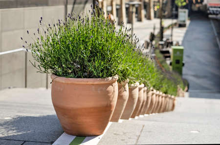 Rotterdam, The Netherlands, May 17, 2020: pots with lavender on the staircase to Koopgoot shopping street to seperate pedestrian flows in order to combat covid-19