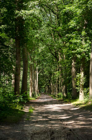 Long and straight, seemingly enless, dirt road throught a deciduous forest near Ellburg, The Netherlands 免版税图像