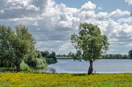 Summer landscape near Wilsum, The Netherlands, with a solitary tree, bushes, already and a field with yellow flowers on the banks of a small lake under a sky with dramatic clouds 免版税图像