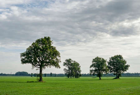 Landscape near Zwolle, The Netherlands, with four trees in a green meadow under a cloudy sky