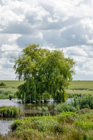 Landscape next to the new Reevediep river channel near Kampen, The Netherlands, with a solitary tree, already and other vegetation