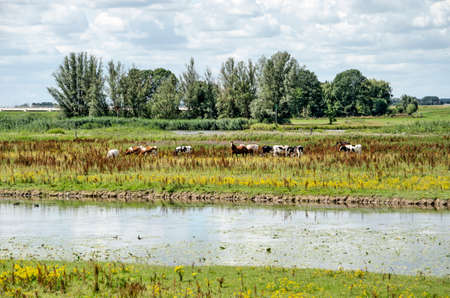 View of Vreugerijkerwaard nature reserve near Zwolle, The Netherlands with a horse and a herd of cows grazing in a landscape with trees, tall grass, wild flowers and a river channel