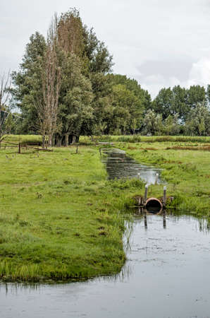 Nostalgic agricultural polder landscape in Groenezoom nature and recreation area near Berkel, The Netherlands, with grassy meadows, trees and ditches 免版税图像