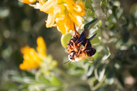 due api accoppiamento, leggermente fuori fuoco