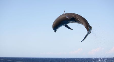 a dolphin in mid air jumping over a rope during a performance