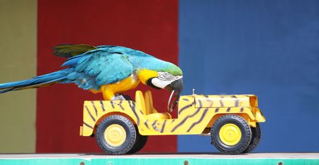 a colorful parrot driving a car whilst performing infront of an audience