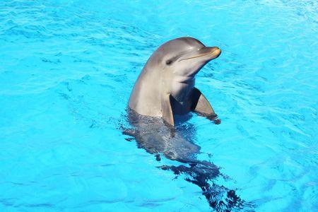 un delfín en una piscina
