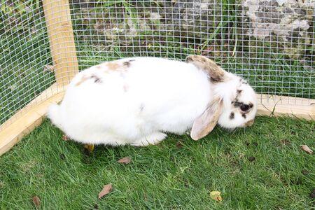rabbit cage: un coniglio bianco birichino coniglietto in una gabbia