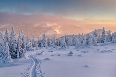 ski run: Landscape with ski run in winter forest among mountains at the sunset. Stock Photo