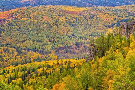 treetops: Yellow autumn forest with treetops, river and road