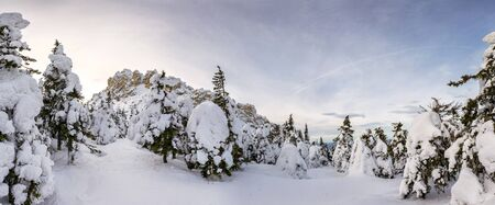 unaffected: Panorama of snow-covered trees and rocks