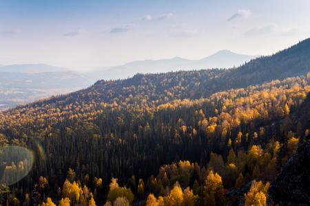 treeline: Yellow autumn forest with treetops