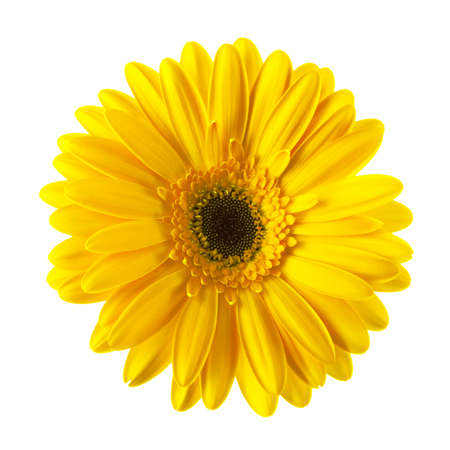 Yellow daisy flower isolated on white background Banco de Imagens