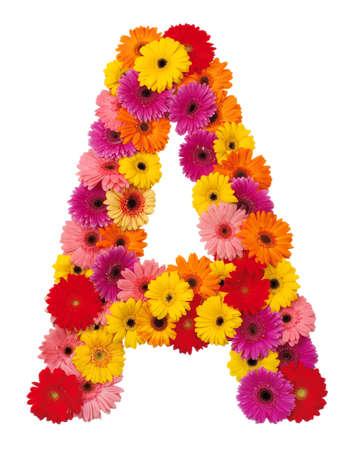 lettre alphabet: Lettre A - fleur alphabet isolée sur fond blanc Banque d'images