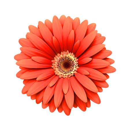 3d flower: Red daisy flower isolated on white background - 3d render Stock Photo