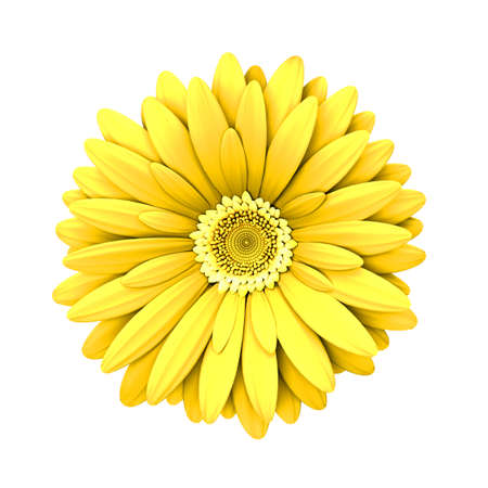 3d flower: Yelow daisy flower isolated on white background - 3d render Stock Photo