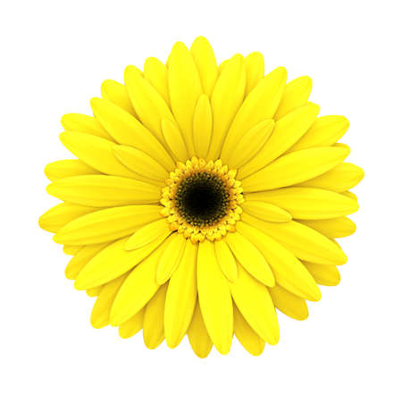 3d flower: Yellow daisy flower isolated on white background - 3d render