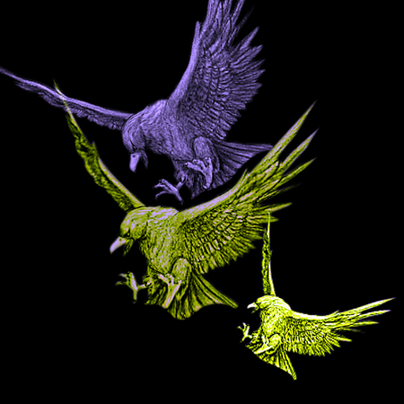 Predatory birds in flight. Angry Eagles