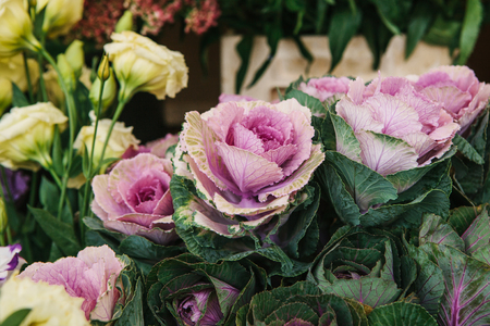 Sale of flowers called Decorative cabbage in the foreground. Other different flowers are next to the background. Stock Photo