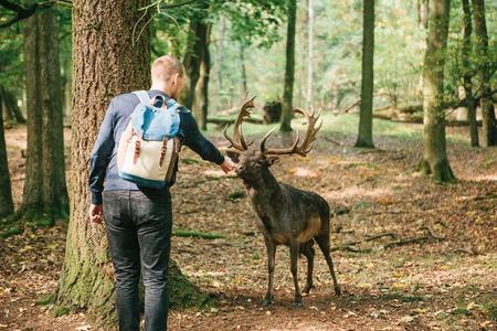 A man feeds a wild deer in a natural habitat