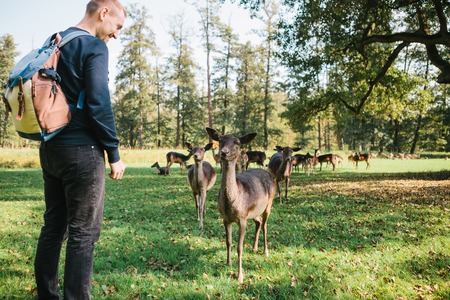A man looks at young deer in a natural habitat. Animals. Stock Photo