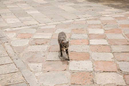 The cat is walking along the sidewalk on a city street. Imagens