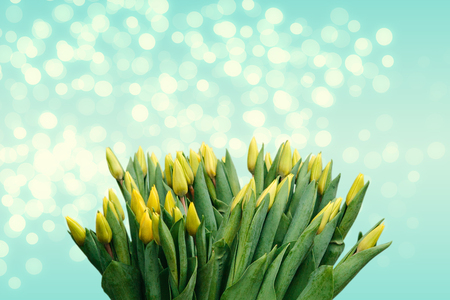 Lots of yellow tulips on a festive background. Top place for text.