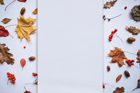 Autumn leaves, rowan and acorns on a white background. In the middle of the empty space for text.