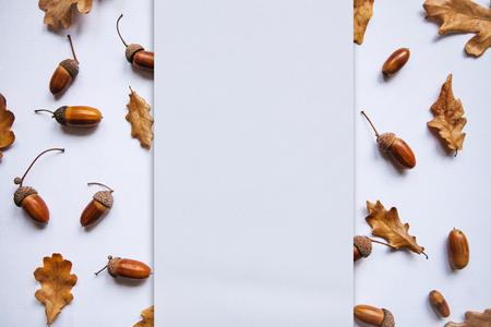 Autumn leaves and acorns on a white background. In the middle of the empty space for text.