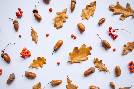Autumn leaves, rowan and acorns on a white background. Abstract composition.