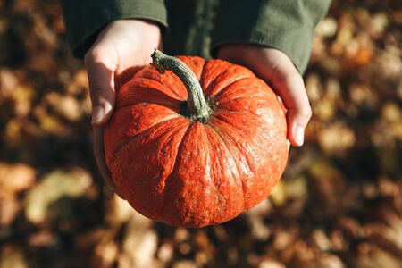 Person or farmer holding a pumpkin. Harvesting or celebrating hollowin or other.