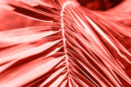 Palm branch in color living coral. Tropical plant in trend color. Reklamní fotografie