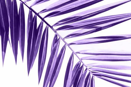 Palm branch in colorultraviolet on a white background. Tropical plant in trend color.