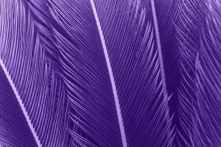 Closeup of fern leaves in color ultraviolet. The leaves of the plant in a trend color. Reklamní fotografie