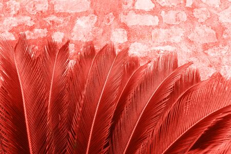 Closeup of fern leaves in color living coral. The leaves of the plant in a trend color.