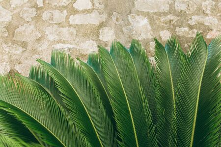 Closeup of fern on a stone background. Tropical green plant. Reklamní fotografie