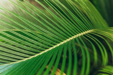 Closeup of fern background. Tropical green plant