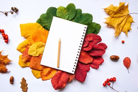 Empty notepad for writing on an autumn background of colored leaves