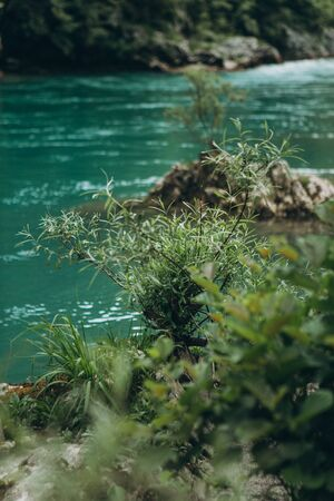 Close-up of green leaves of a plant against the background of the turquoise Tara river in Montenegro. An ecologically clean and eco friendly place.