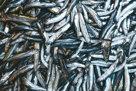 A lot of fresh little silver fish background Stock Photo