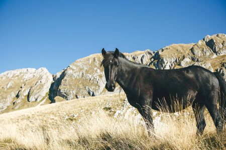 Portrait of a black stallion or horse on a background of hilly terrain and blue sky.